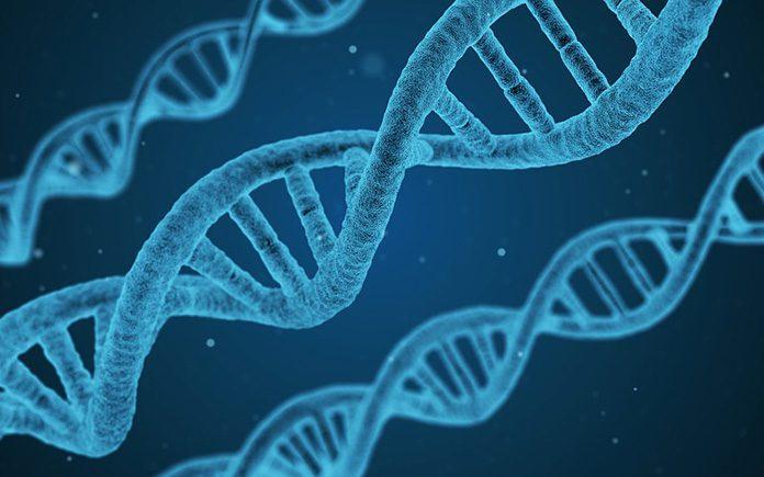 investigación desarrollo cáncer