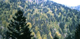 GMV bosques