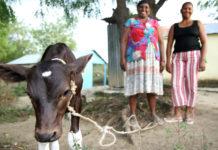 El Agrocrédito es un producto microfinanciero creado a medida para la pequeña agricultura dominicana