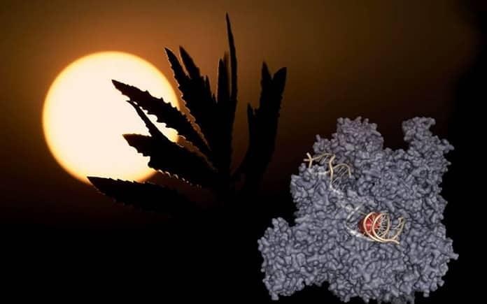 celulas ADN radiacion