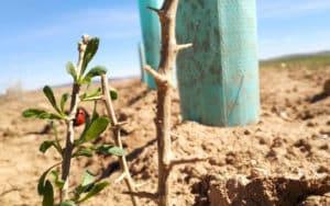 Fundacion Global Nature La Mancha