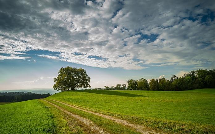 Telefonica sostenibilidad descarbonizacion