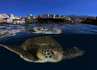 canarias turismo sostenible