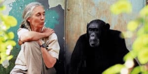 jane goodall steam